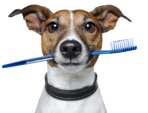 A Raw Food Diet Benefits Pets' Oral Health