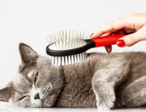 Hairballs and Diet