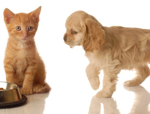 Raw Feeding: puppies and kittens